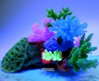 GLOWLIGHT CORAL (L) BLUE (AZ27104)